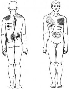 massazh-spiny-pri-skolioze
