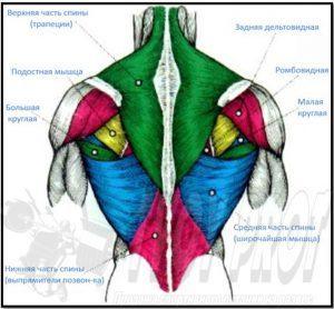 כאבים בצוואר לא נובע מהצוואר בלבד